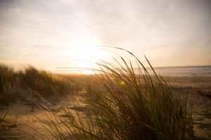 wind grass beach sea
