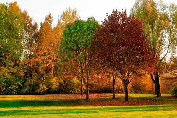 autumn daylight environment fall