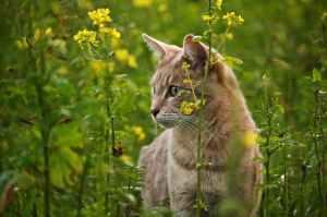 adorable animal cat cat s eyes