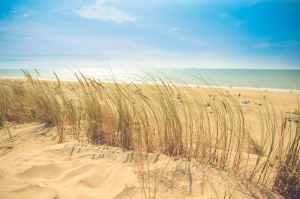 sea beach sand sun
