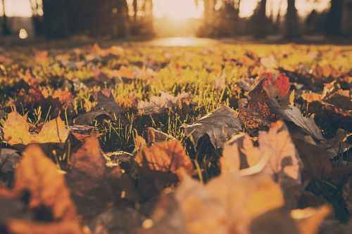 forest meadow leaves autumn