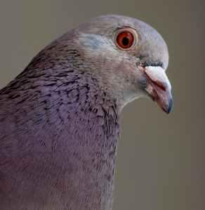 animal animal photography avian beak