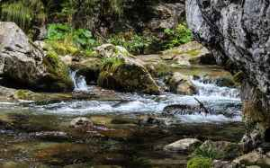 creek brook stream nature