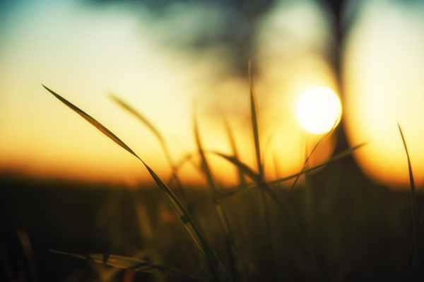 close up photo of green grass