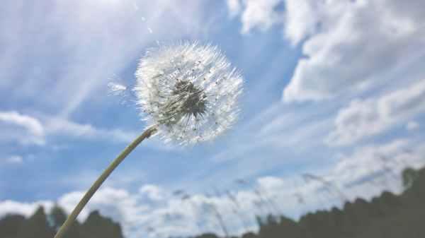beautiful bloom blur bright