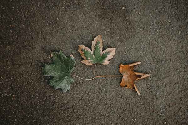 green leaf on black concrete surface