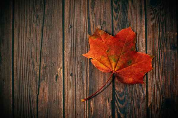 autumn leaf board colors dark
