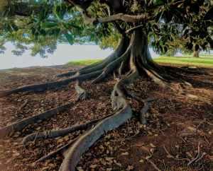 gray trunk green leaf tree beside body of water