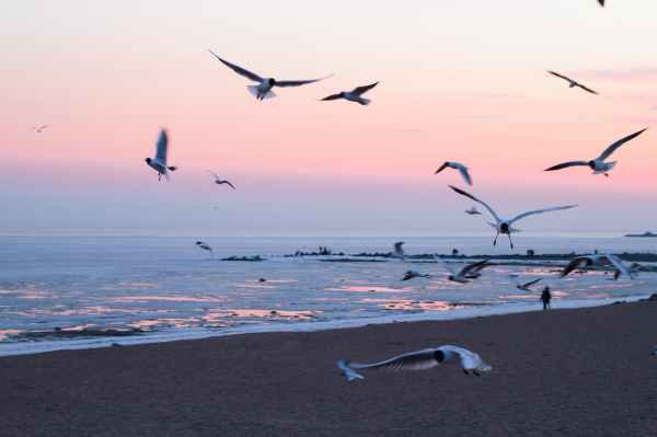photo of flying seagulls on beach