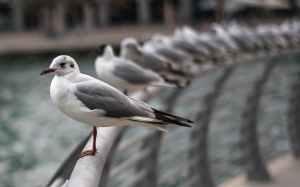 birds marina dubai