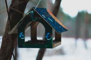 selective focus photography of blue wooden birdhouse