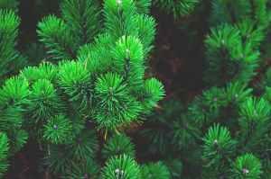 blur branch celebration christmas
