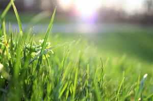 blade of grass depth of field environment garden