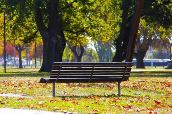 black wooden bench on green grass