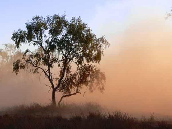 dust tree outback fog